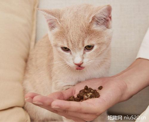给猫喂什么食物比较好