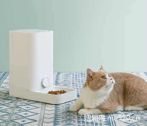 宠物智能喂食器多少钱